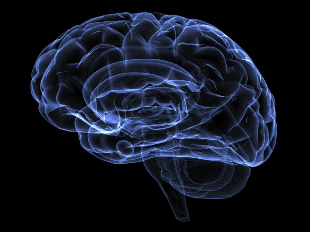 Imagen por rayos X de un cerebro